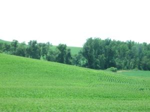 The greenest of green fields.